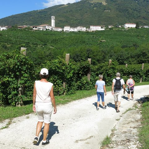 Wine walk in the hills of Prosecco wine