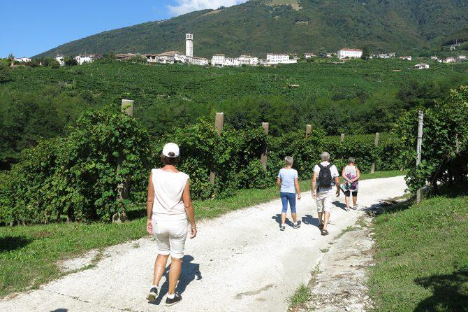 Wine walk in the hills of Prosecco wine
