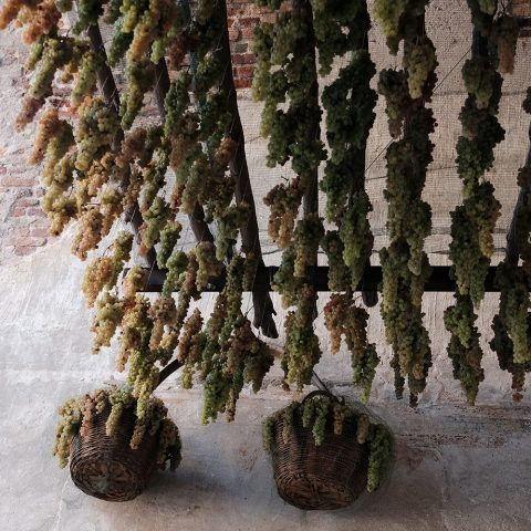Grapes hanging in Porta Verona of Soave